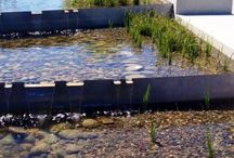 water in landscape