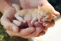 Leonardo McWhiskers. / My fluffy, fantastic, orange & white cat. :) / by Sarah Takacs