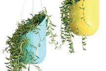 ZÖLDEK / Növények a lakásban