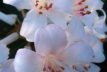 Flowery fair / by Ingrid Ann