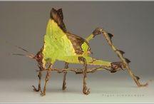 Buggy! / by Michelle Rivenbark