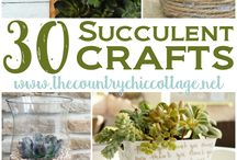 Succulent pots and tins