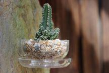 Ideas / Creative ways to use Grow Globe's terrariums