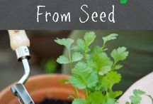 How to grow from seeds