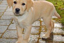 Dog's ❤ / My favorites animals (*゚ェ゚*)
