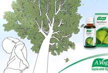 A. Vogel Geriaforce® / Bάμμα A.VogelGeriaforce από φύλλα Ginkgo-biloba φρέσκιας συγκομιδής.Είναι από τα παλαιότερα,γνωστά στον άνθρωπο,βότανα.Φρέσκα,πράσινα φύλλα Ginkgo biloba,συγκεντρώνονται κάθε άνοιξη για να δημιουργήσουν το βάμμα A.Vogel Geriaforce,που συμβάλλει στην καλύτερη κυκλοφορία του αίματος στον εγκέφαλο και στη διατήρηση της υγιούς κυκλοφορίας του αίματος γενικότερα.  http://www.avogel.gr/product-finder/avogel/geriaforce_tinct.php