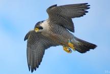 Extraordinary Wildlife / Celebrate extraordinary wildlife species for the 2012 National #wildlifeweek www.nwf.org/wildlifeweek / by National Wildlife Federation