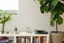 The amazing Fiddle Leaf Fig