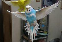 ■鳥さんとか