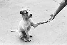 OMD - Oh my dog!