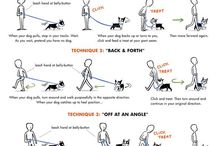 Teaching your dog to walk on a lease