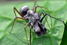 Astonishing Arachnids