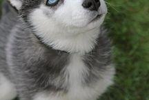 Pups / by Amanda Houtz