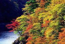 Le Japon en automne / Découvrez l'automne japonais aux couleurs flamboyantes.