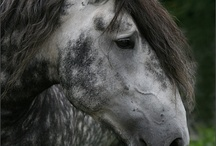 Beautiful Horses & Donkeys / by Nisha Umbarger