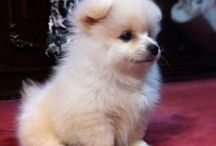 Puppies!! / by Kara Crowe