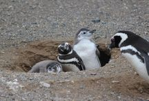 My trip to Antarctica /  http://www.wanderingsearching.com/2013/12/penguin-love-3.htm