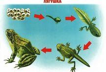 rozwój zwierząt