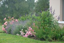 jardines con aire romantico / jardines con Rosas, lavandas, salvias, budleias, gauras