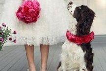 Wedding pets / #vintage #campervan  #vwcamper #kombicelebrations.com.au #eventinspiration #weddinginspiration #styling #weddingstyle #socialmedia #instagram #hashtag