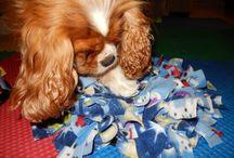 Dog enrichment toys.