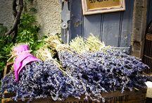 Lavender / by Rosa M Fernández