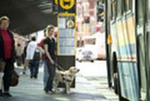 A vakvezető kutya nagyobb segítséget jelent bármilyen élettelen segédeszköznél / A vakvezető kutya nagyobb segítséget jelent bármilyen élettelen segédeszköznél (Guide dog is more helpful than any inanimate helping tool...)