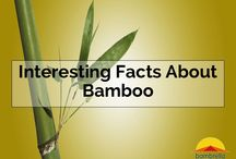 Bamboo Facts / All about #Bamboo