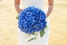 Wedding | Royal Blue