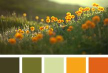 Orange color palettes