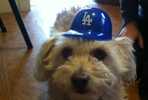 Dodger Dogs & Cats / by Los Angeles Dodgers