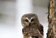 Oh wise Owl!!
