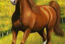 caballos o animales