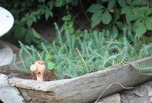 My vintage - garden