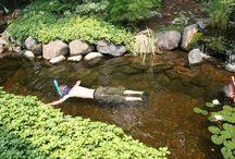 Prírodné jazera a bazény