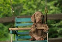 dog stuff / by Charleen Mcpeek-davis