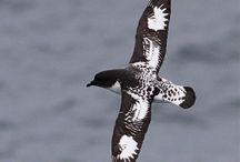 Birds - Antarctica