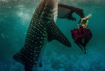 Diving-fotografia submarina