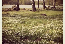 四季 / 春