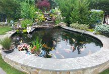 Bassin i haven