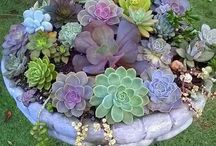 I Love Succulents