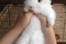 fluffy bunnies! 8D