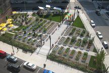 Urban Greening  / by Lewis Ginter Botanical Garden