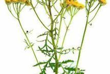 zdrowe zioła