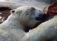 Themes & Schemes: Polar Pals