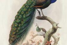 Monograph of the Phasianidae from Daniel Giraud Elliot