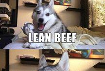 Funny Pun Dog