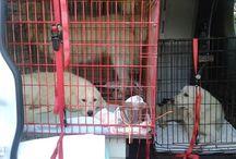 Rikki's Refuge Rescue Stories / Photos and stories of animals that have found safe haven at Rikki's Refuge, Rapidan, VA. - www.rikkisrefuge.org