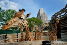 Parc Zoologique de Paris / L'actualité en images sur le Parc Zoologique de Paris (France)