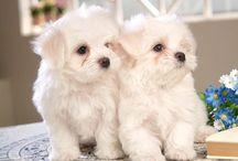 psi a štěnata
